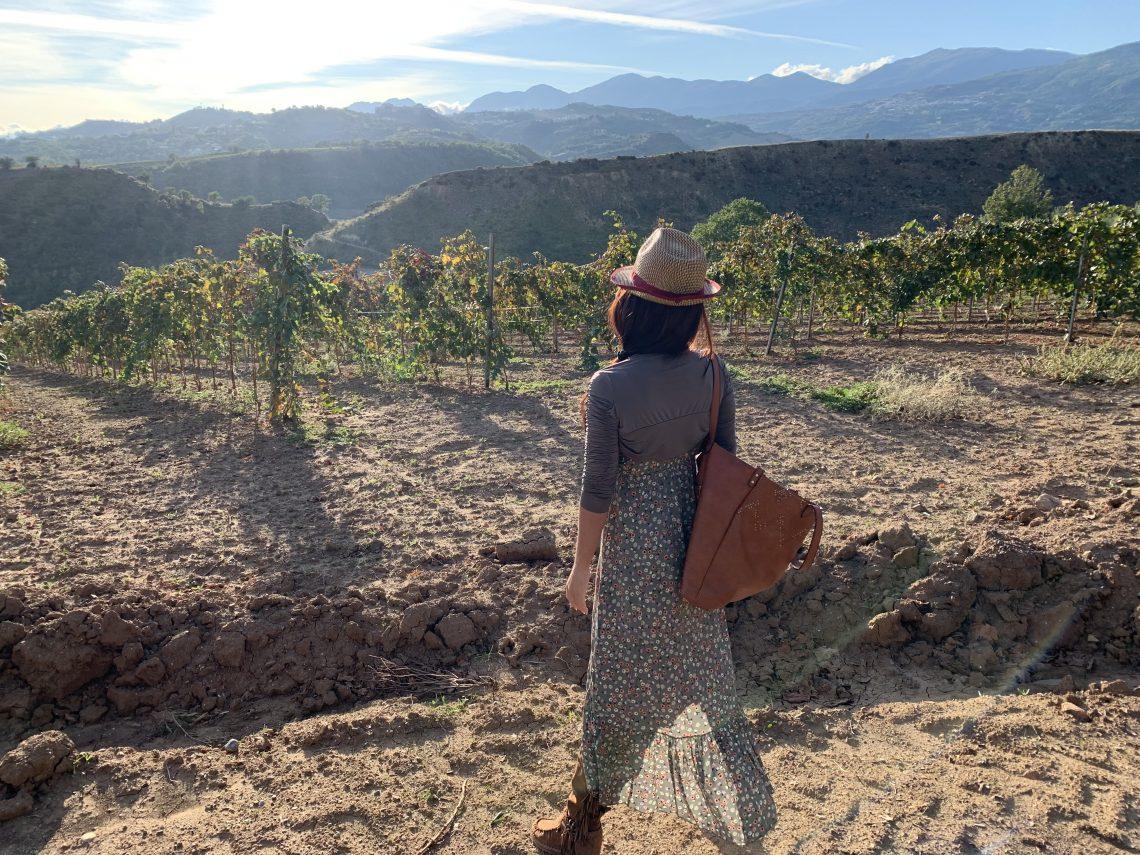 Calabria tra enogastronomia e passeggiate nel vigneto