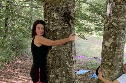 Abbraccio degli alberi nel Parco del Pollino